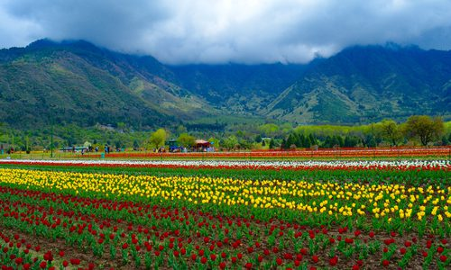 Spring Destinations that will go BLOOM in your heart!