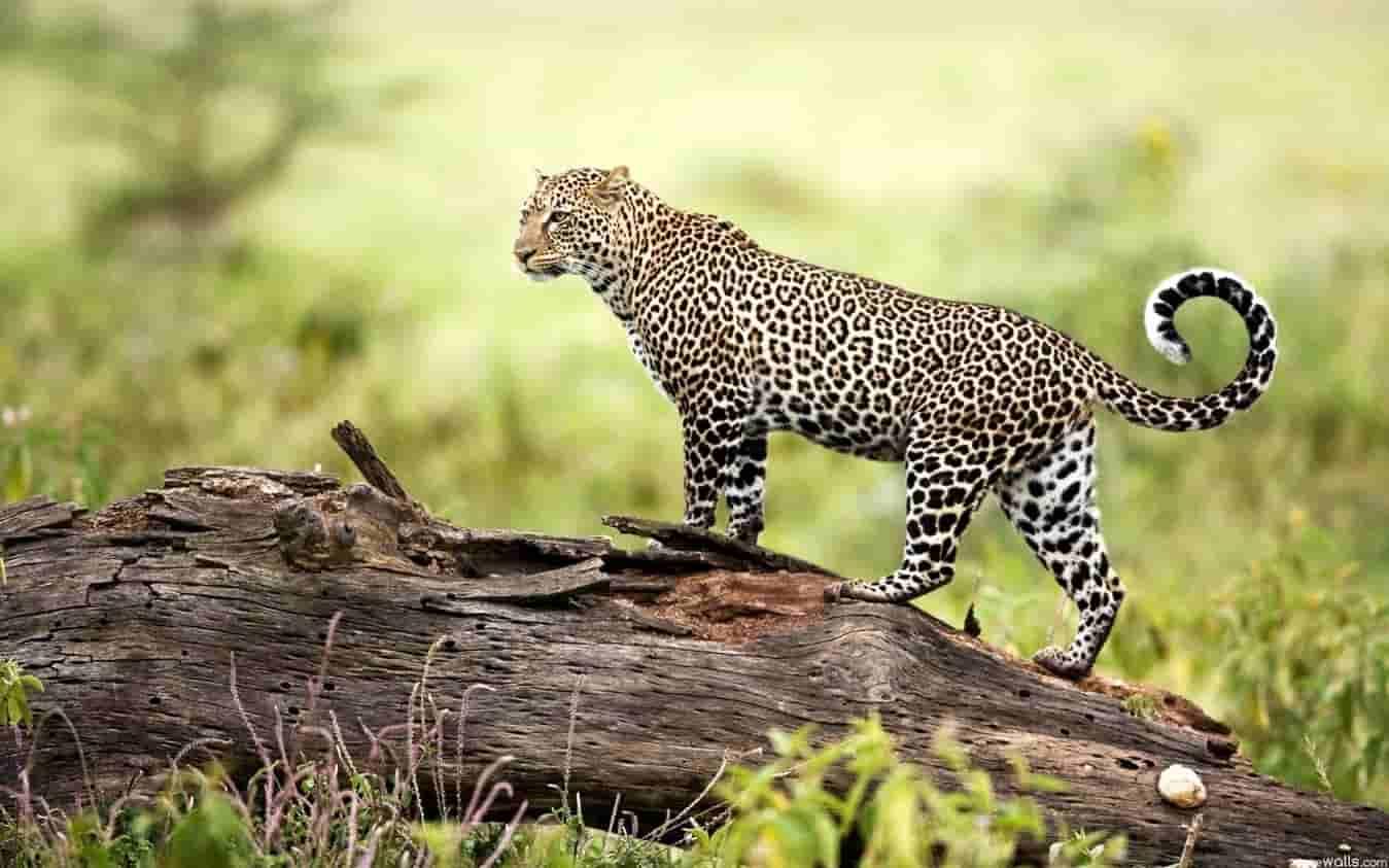 23 Wildlife Sanctuaries in India, List of Wildlife