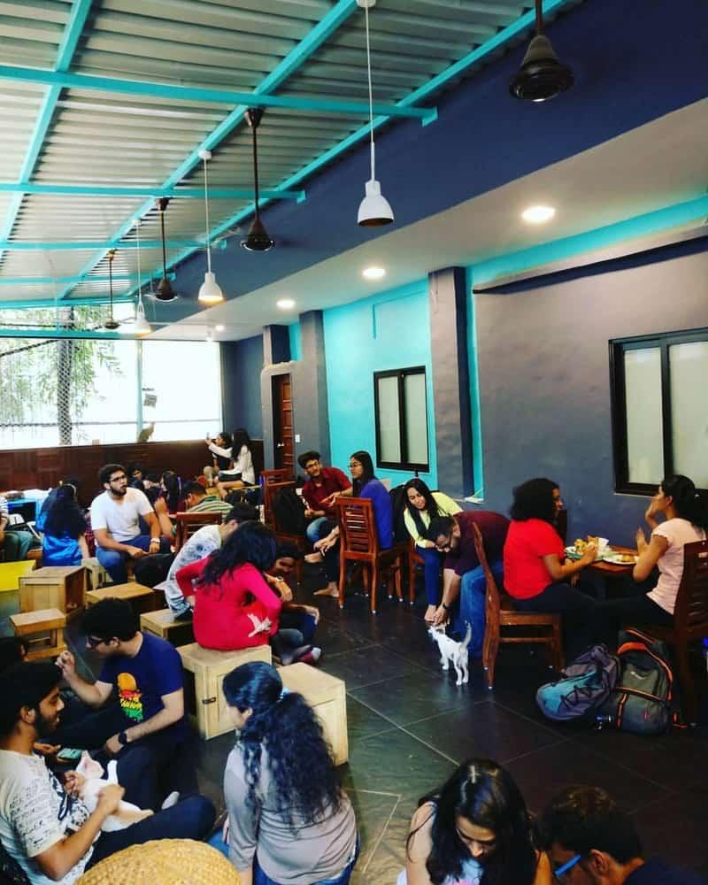 Cat Cafe Studio, Versova