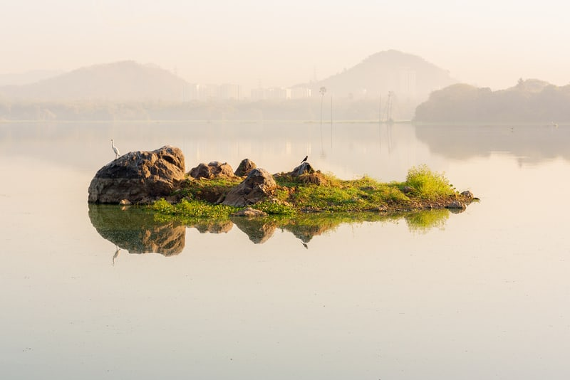 Powai Lake is a serene spot to watch a wide variety of birds