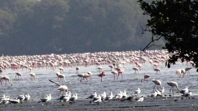 Sewri Mangrove Park