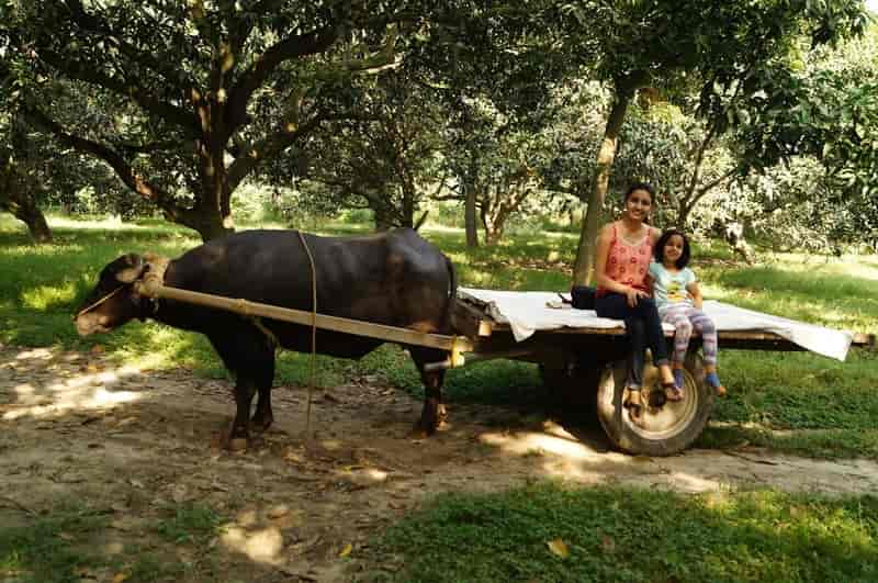 A family enjoying a bullock cart ride in Kuchesar