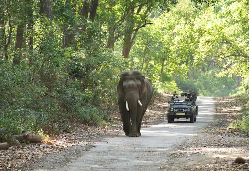 A safari in progress in the national park