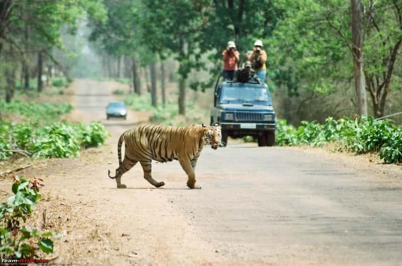 Andhari Tiger Reserve, Chandrapur