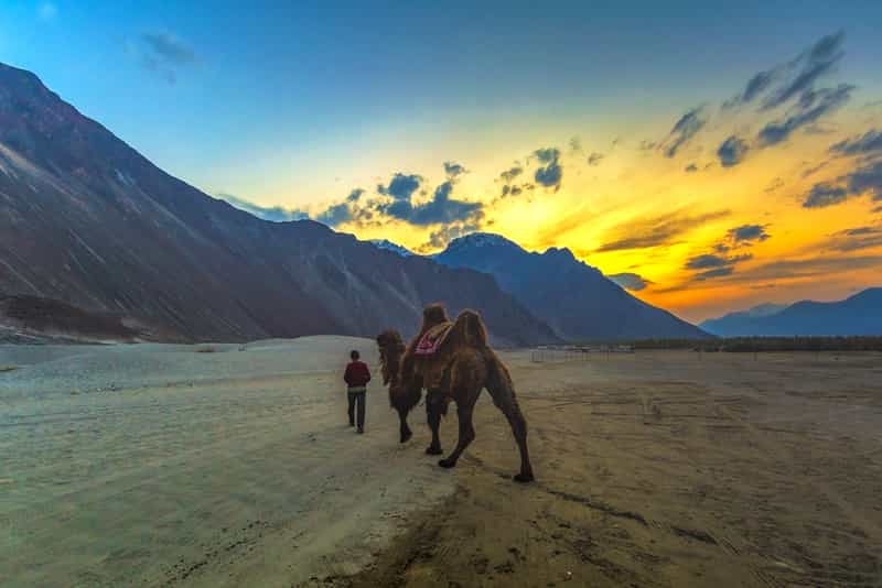 Camel Safari at Nubra Valley