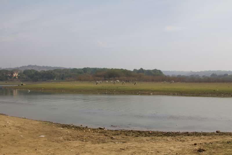 Enjoy serenity on the banks of the Damdama Lake