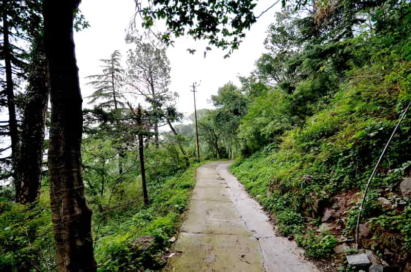 Enjoy stunning views of thills as you tour Kasauli on foot
