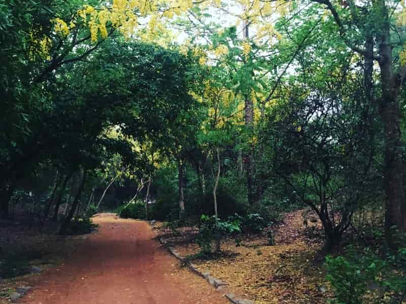 If you see a woman dressed in white in Sanjay Van, look away