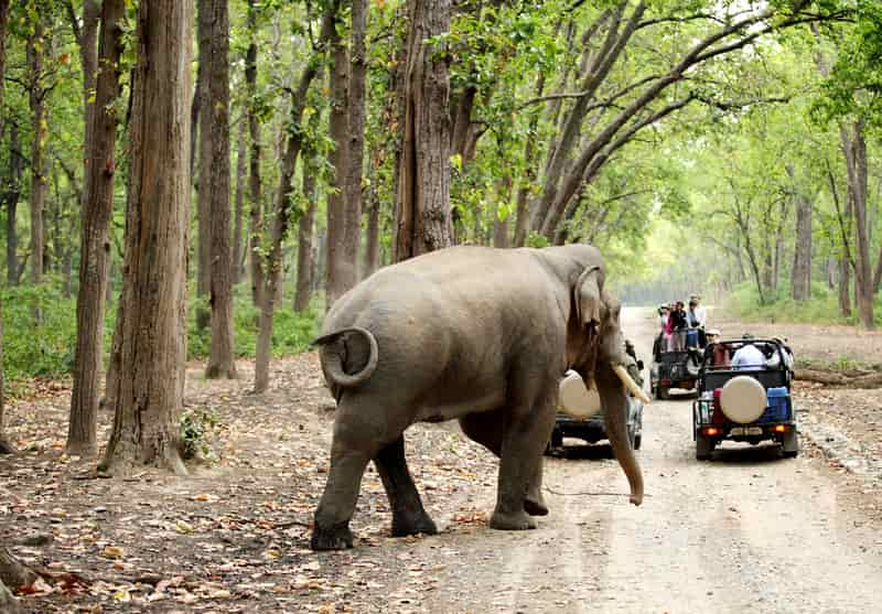 Jim Corbett National Park in Uttarakhand