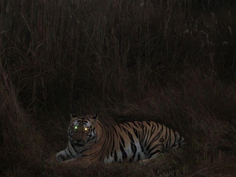Jungle Night Safari