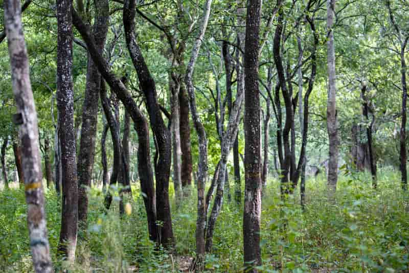Marayoor Forests