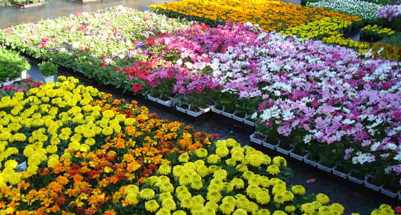 Nursery of Flowers