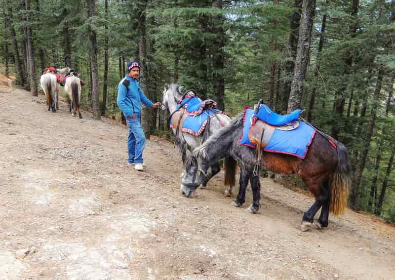 One can enjoy horse riding in Naldehra