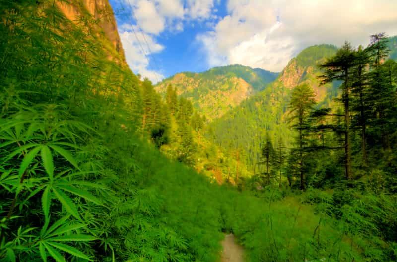 The Parvati valley en route Kasol