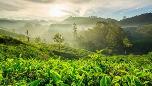 16 Things to do in Munnar for an Unforgettable Vacation