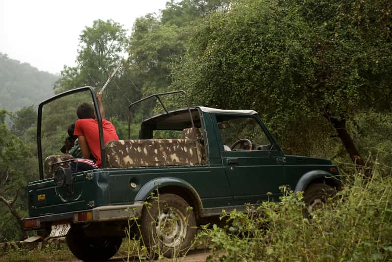 Tracking the tiger in an open Jeep