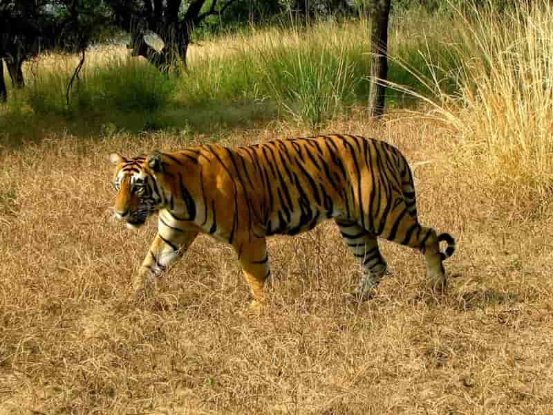 Hastinapur Wildlife Sanctuary