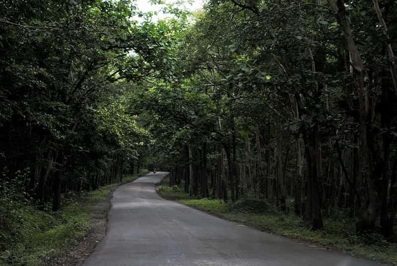 A drive through Anshi National Park