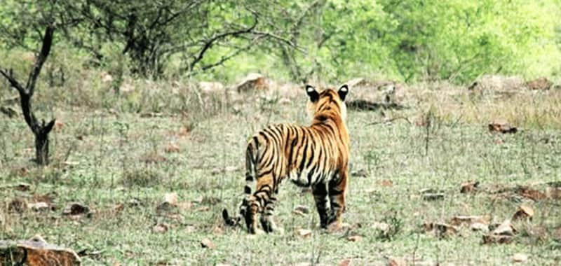 Chikhaldara Wildlife Sanctuary Chikhaldara is a hill station in Vidarbha that offers tourists many sightseeing