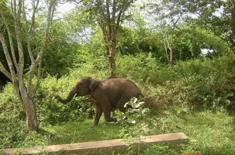 Dajipur Wildlife Sanctuary, Dajipur