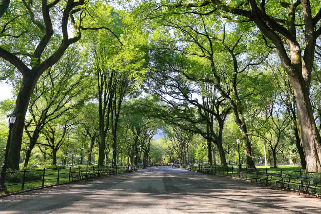 Image result for delhi beautiful roads with trees,nari