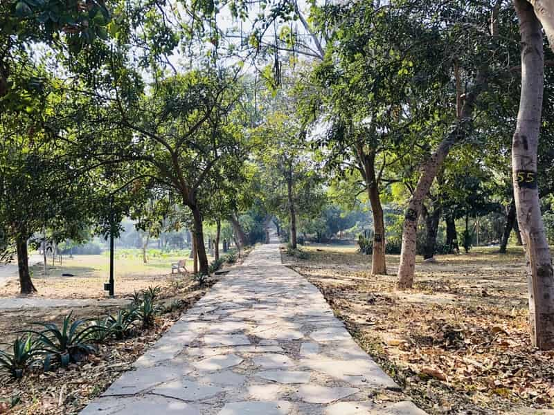Go for a nice romantic walk to the Buddha Garden