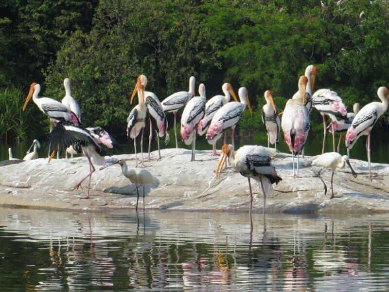 Kaggaladu Bird Sanctuary