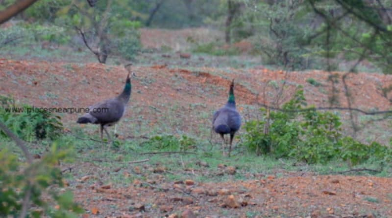 Mayureshwar Bird Park,