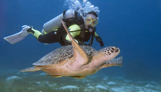 13 Famous & Best Place for Scuba Diving in Goa