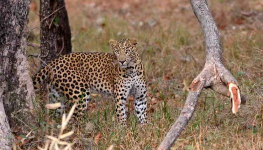 5 Nature-Loving National Park in Hyderabad
