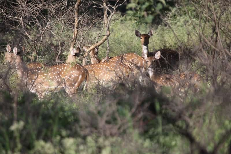The Sagareshwar Deer Park is India's only man-made deer park