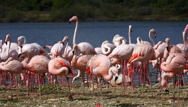 The Thane Creek Flamingo Sanctuary, RRT Road