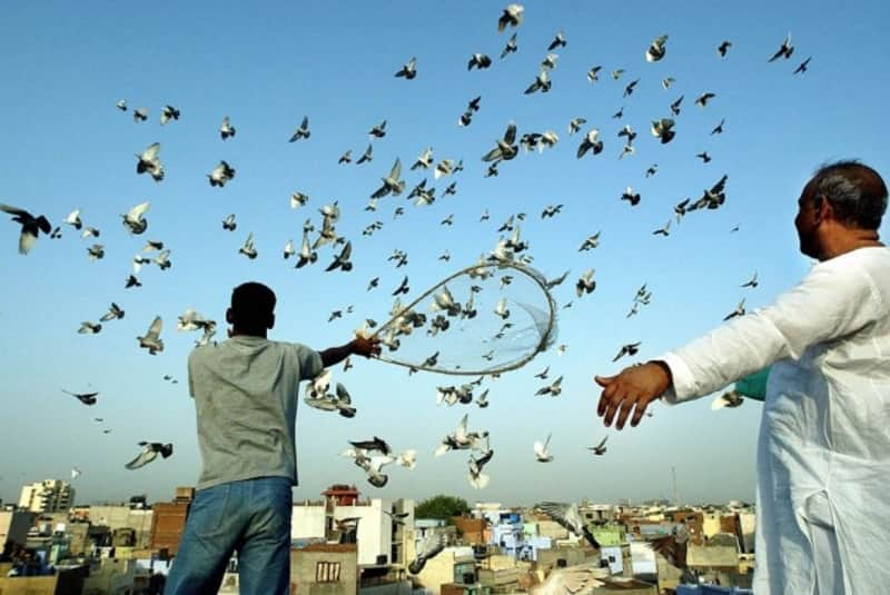 Trainers with their pigeons