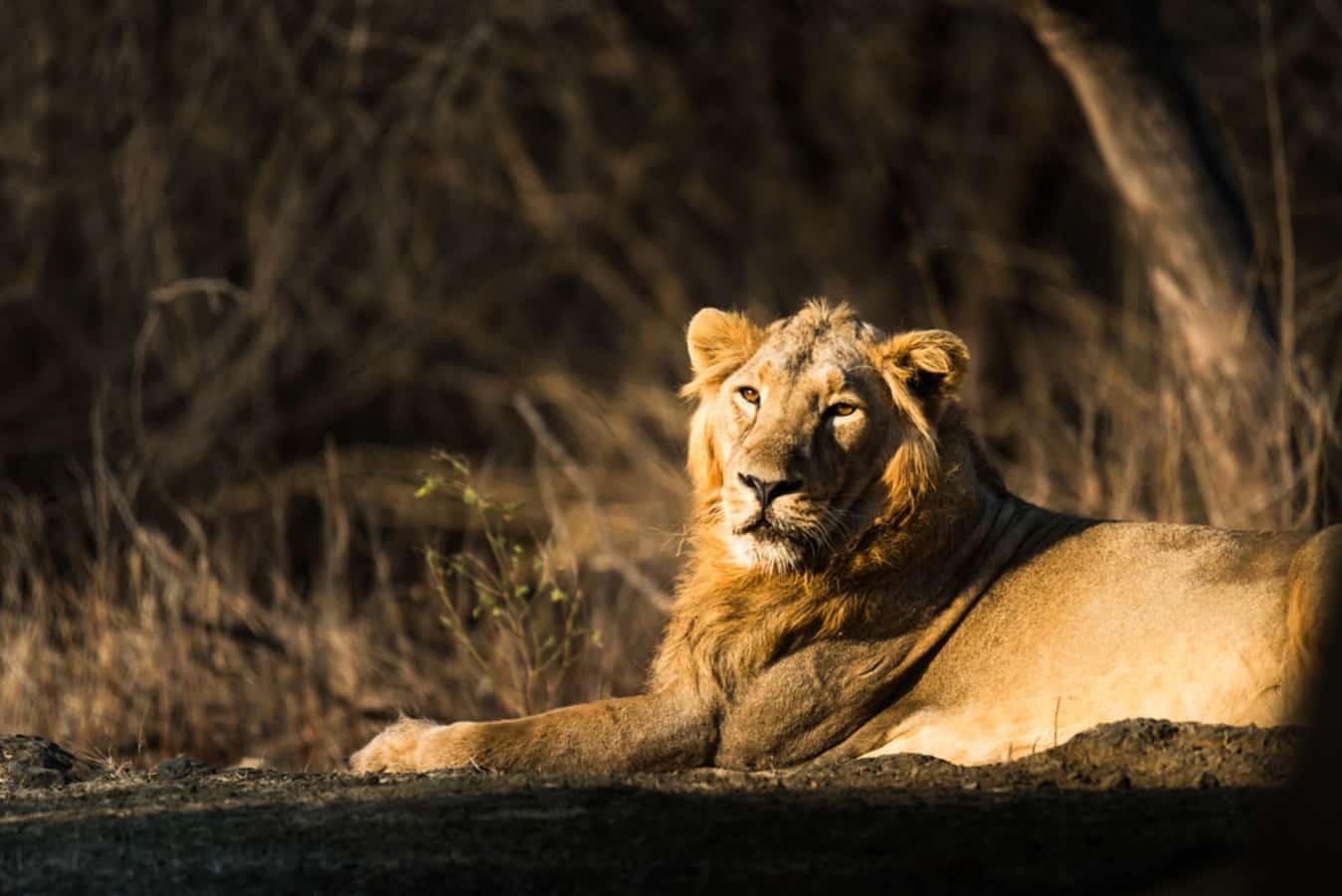12 Wildlife Sanctuary Near Mumbai