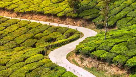 3 Great Road Trips from Bangalore to Munnar