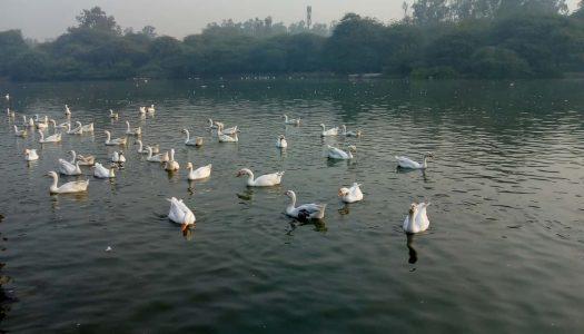 15 Lakes Near Delhi For a Refreshing Break