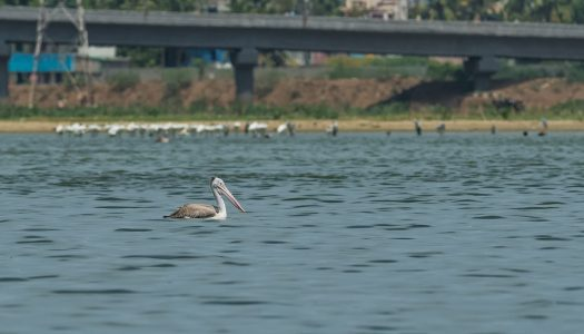 11 Lakes in Chennai that are a Boon to the Place