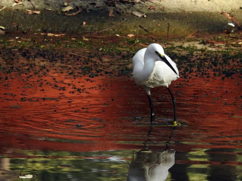 A bird at Indroda Nature Park