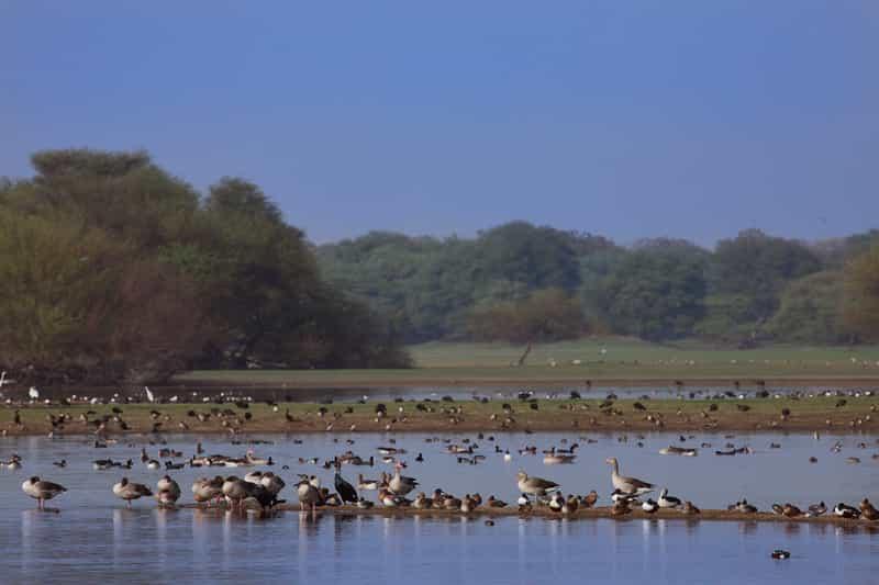 Birds at the Thol Sanctuary