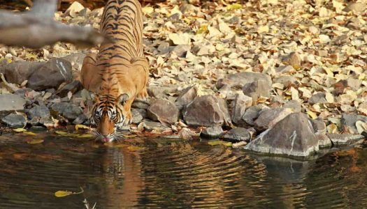 The 13 Best Jungle Safaris in India