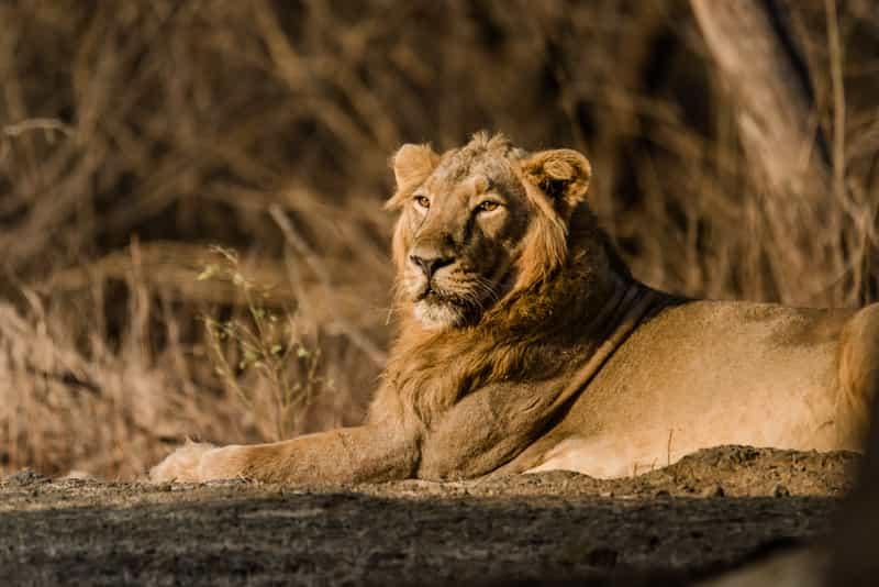 Sasan-Gir Wildlife Sanctuary
