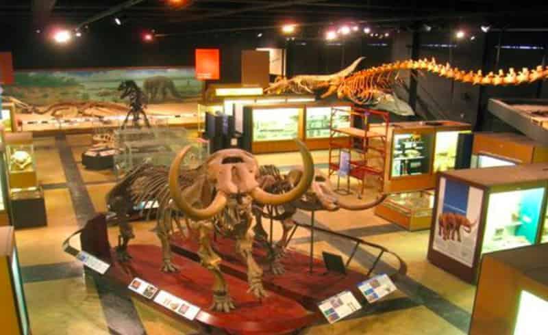 The Museum interiors