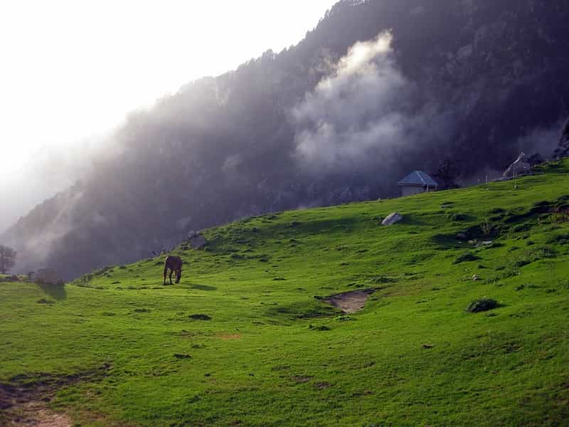 Triund in Dharamshala