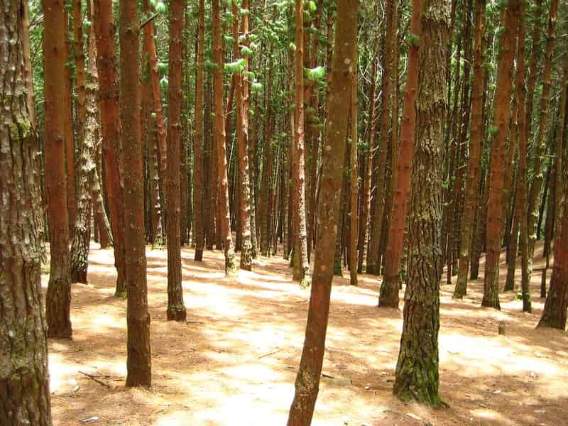 View of the trees