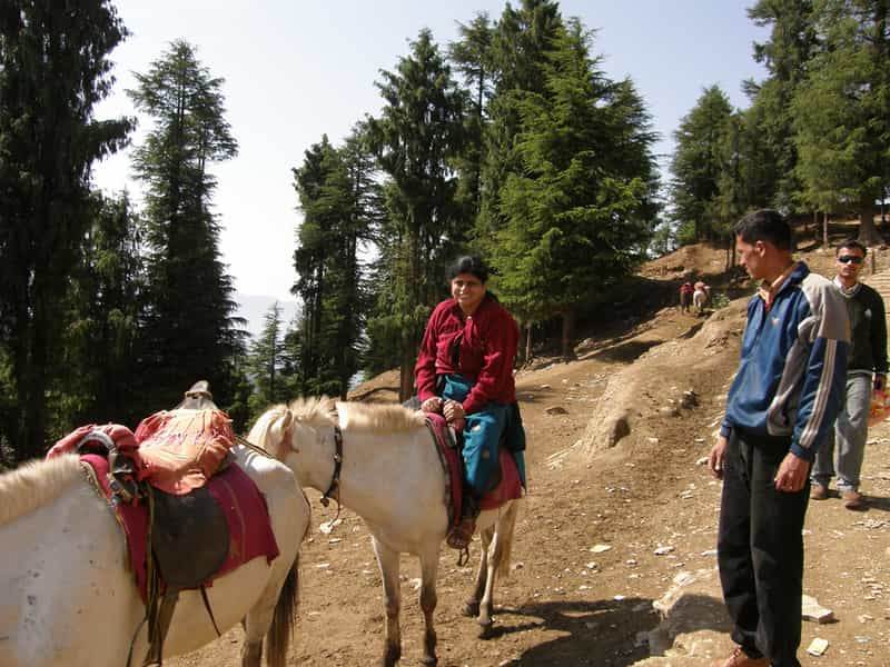 Horse Riding in Dalhousie
