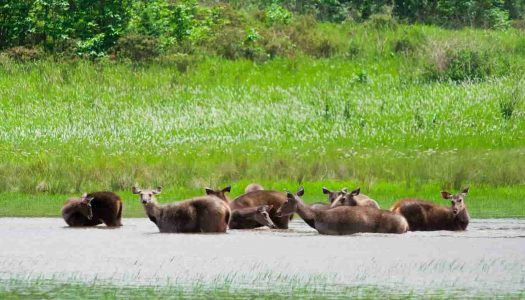 All You Need To Know About The Sundarbans National Park