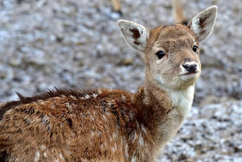 Deer at the Indira Gandhi Zoological Park