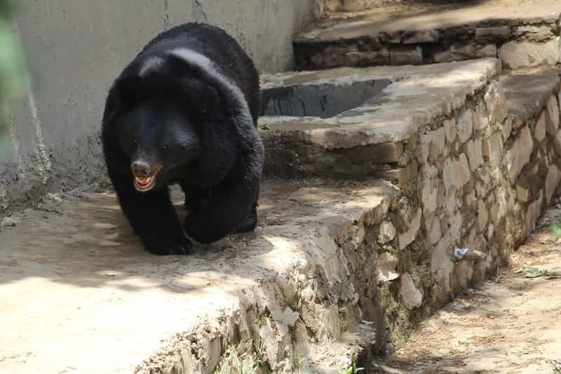 Bears at the Daroji Sloth Bear Sanctuary
