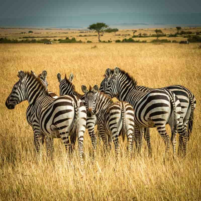 Take a Safari in Kenya