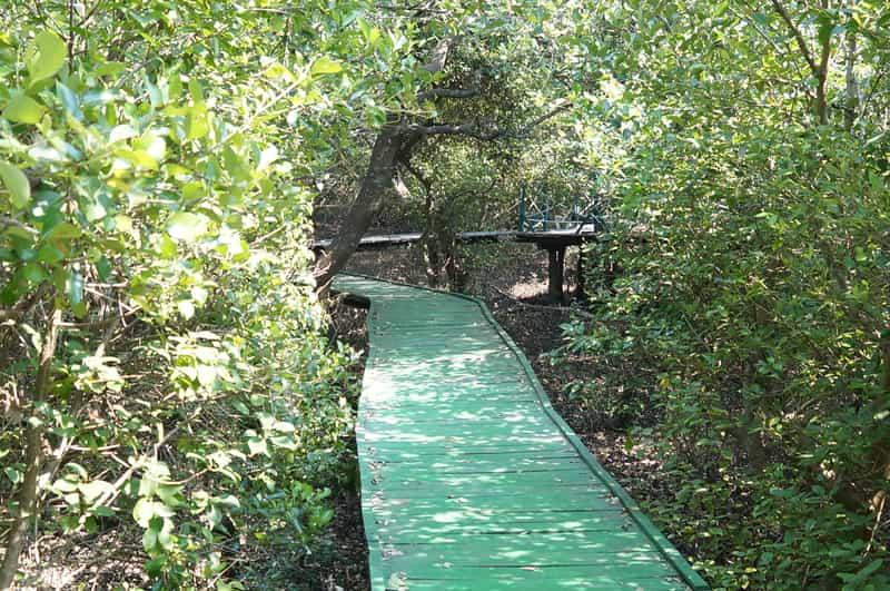 Wooden bridge in Coringa